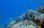 Большое путешествие вглубь океанов 3D (2009) DVDRip
