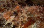 HDScape: Морские Виды (2006) BDRip
