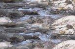Изучая природу 3D (2012) BDRip 1080p